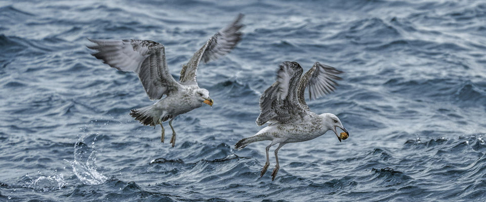 Marmara Seagulls by Tomás Llamas Quintas | Buy Posters, Frames, Canvas  & Digital Art Prints