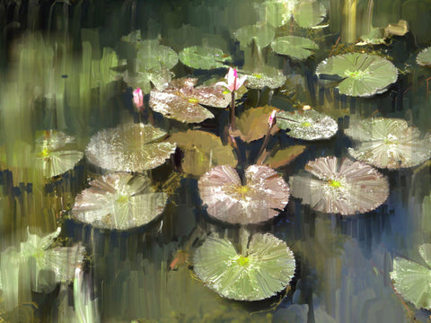 Lily Pond by Ushas Fine Art Creations