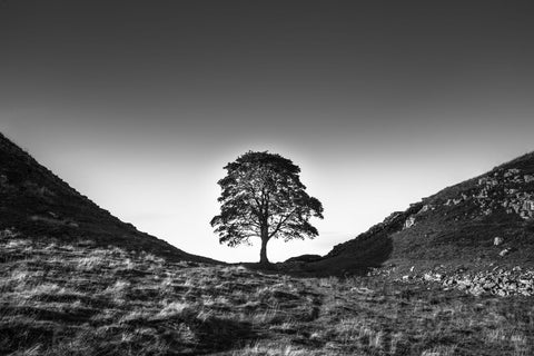 Sycamore Gap - Large Art Prints