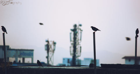Bird Silhouette by Rakesh Oswal