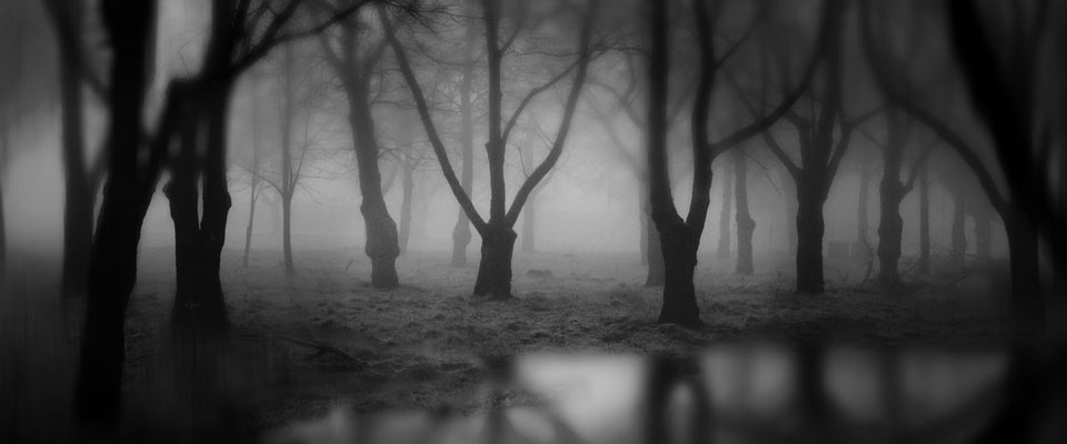 Dark Woods by John Palmer Art Works | Buy Posters, Frames, Canvas  & Digital Art Prints