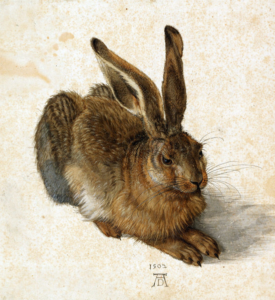 Hare - Art Prints