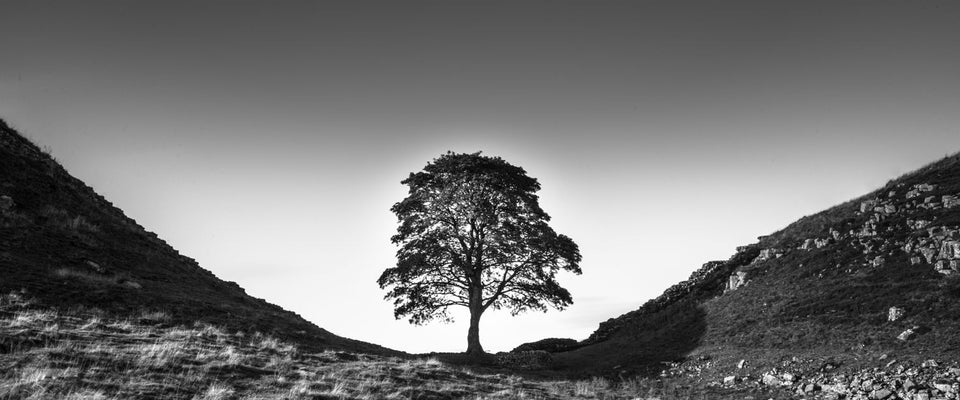 Sycamore Gap by Stuart Adams | Buy Posters, Frames, Canvas  & Digital Art Prints