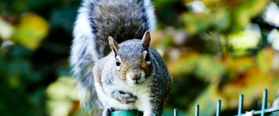 Curious Squirrel by ISourceArts | Buy Posters, Frames, Canvas  & Digital Art Prints