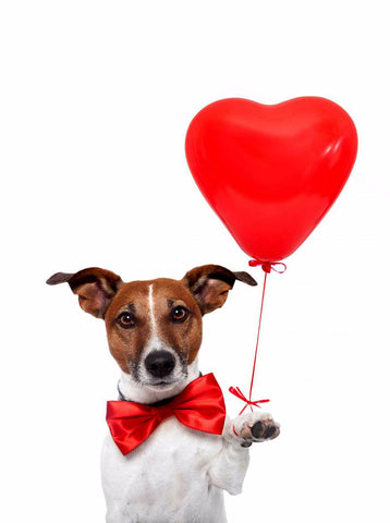 Cute Dog with Heart by Sina Irani