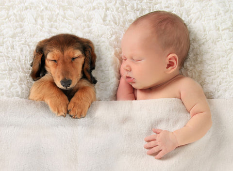 Adorable Baby And Puppy Napping Together