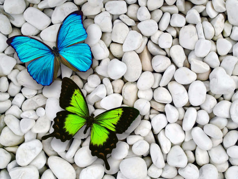Beautiful Butterflies Sitting On Pebbles