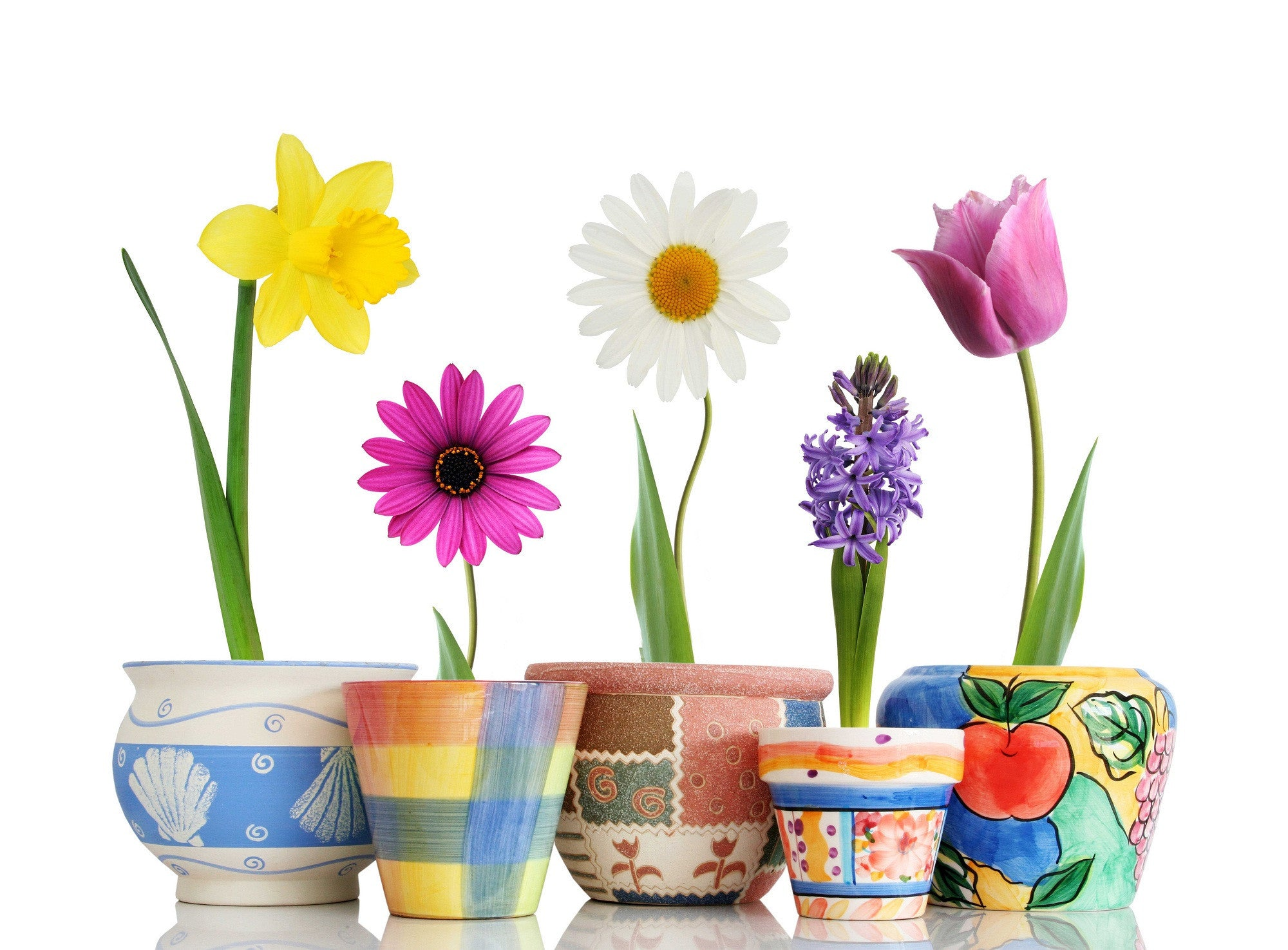 Beautiful Spring Flowers Pots Posters by Sherly David