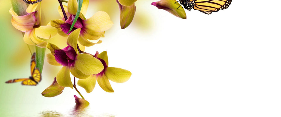 Beautiful Butterflies Sitting On Orchid Flowers by Hamid Raza | Buy Posters, Frames, Canvas  & Digital Art Prints