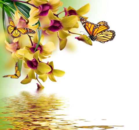 Beautiful Butterflies Sitting On Orchid Flowers