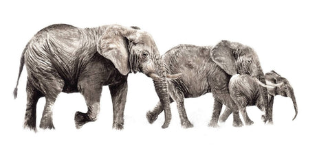 Beautiful Elephant Family - Painting Poster