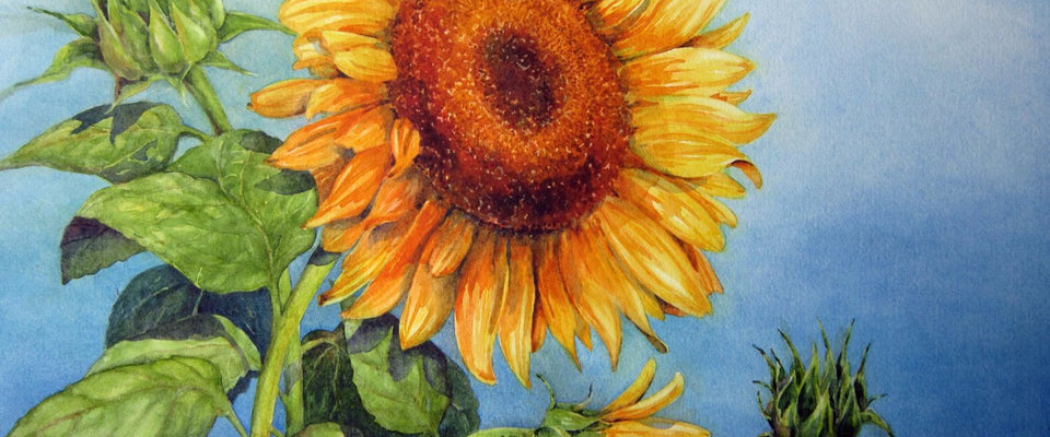 Blooming Sunflowers by Michael Pierre | Buy Posters, Frames, Canvas  & Digital Art Prints