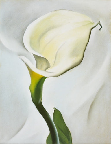 Artwork of Calla Lily Turned Away by Georgia O'Keeffe