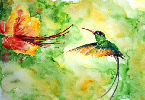Colibri Hummingbird - Colorful Painting - Bird Wildlife Art Print Poster