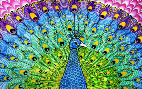 Colorful Peacock Art