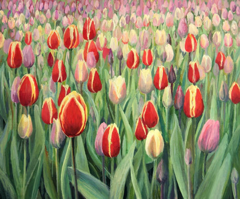 Field Of Tulips - Posters