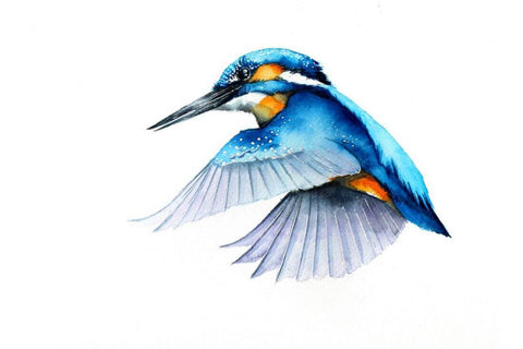 Flying Kingfisher - Watercolor Painting - Bird Wildlife Art Print Poster