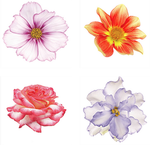 Four Delicate Flowers Painting - Dahlia, Rose, Violet & Cosmo - Art Panels