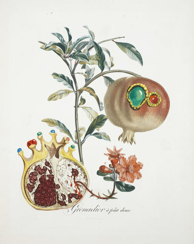 Fruit Series - Pomogrenate (Grenade Et Lange) By Salvador Dali - Framed Prints