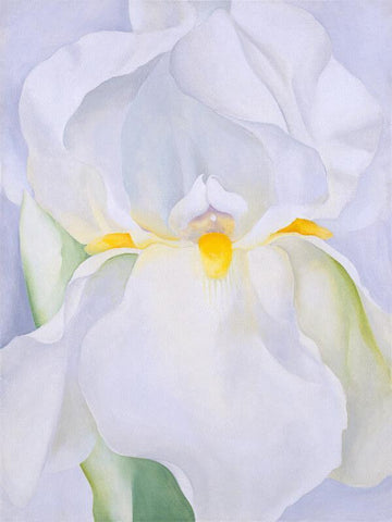 White Iris No 7 - Canvas Prints