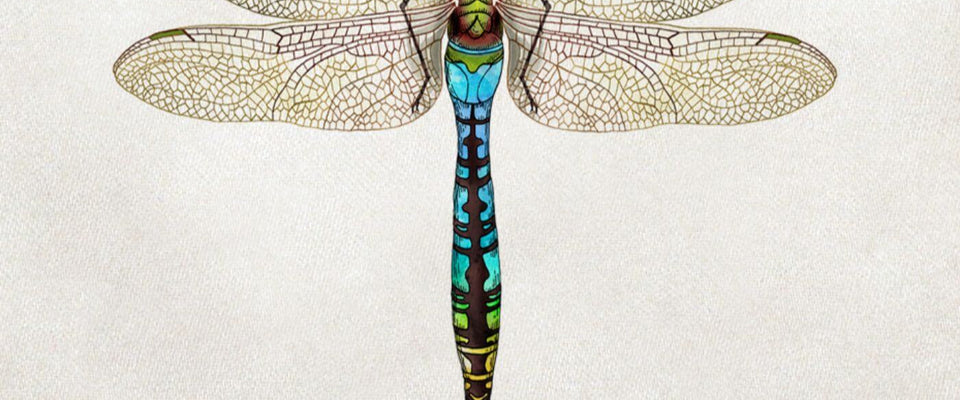 Green Darner Dragonfly - Nature Painting by Aron | Buy Posters, Frames, Canvas  & Digital Art Prints