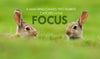 Motivational Quote: FOCUS - Framed Prints