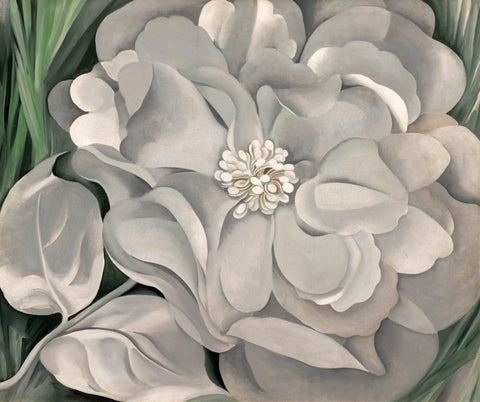 White Calico Flower - Whitney - Georgia OKeeffe