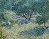 Olive Orchard - Canvas Prints