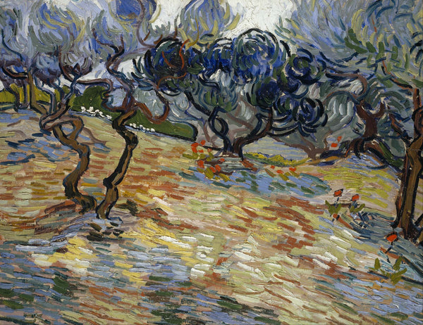 Olive Trees - Large Art Prints