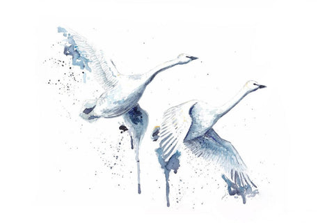 Pair Of Swans In Flight - Delicate Watercolor Painting - Bird Wildlife Art Print Poster