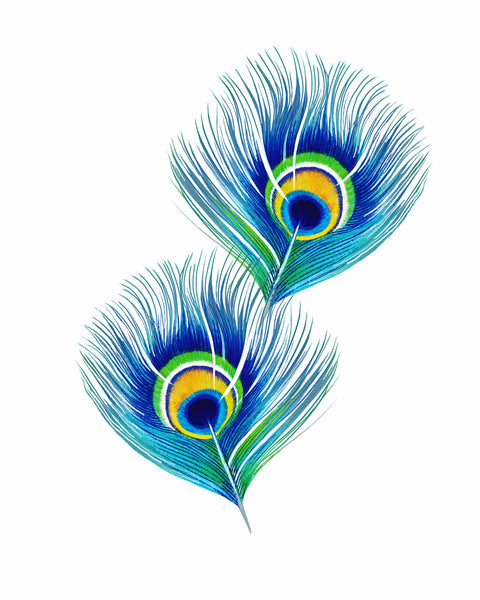 Peacock Feathers - Canvas Prints