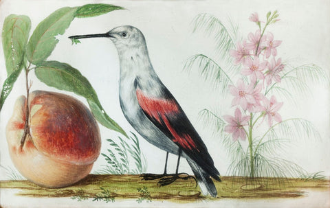 Birds and Fruit - Posters