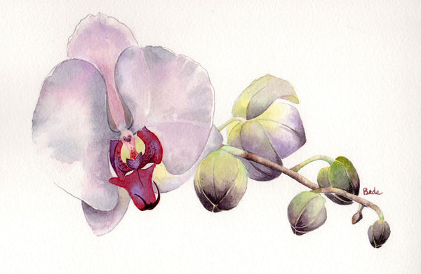 Pleasant and a Pleasing Orchid - Life Size Posters