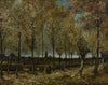 Poplars Near Nuenen - Canvas Prints