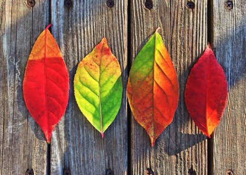 Colorful Rainbow  Leaves - Posters
