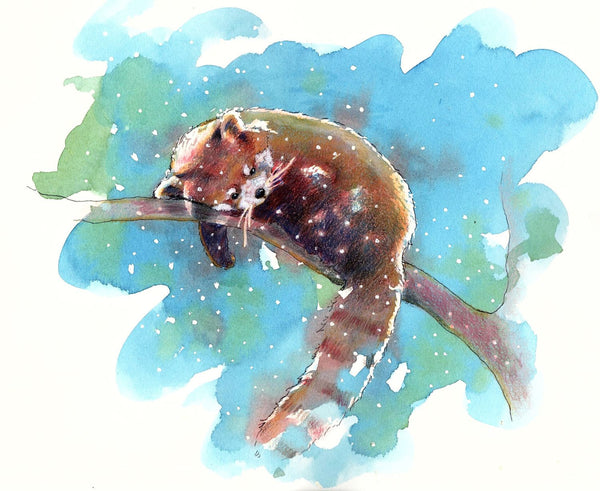 Red Panda - Canvas Prints