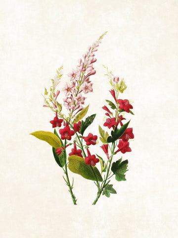 Botanical Illustration - Posters
