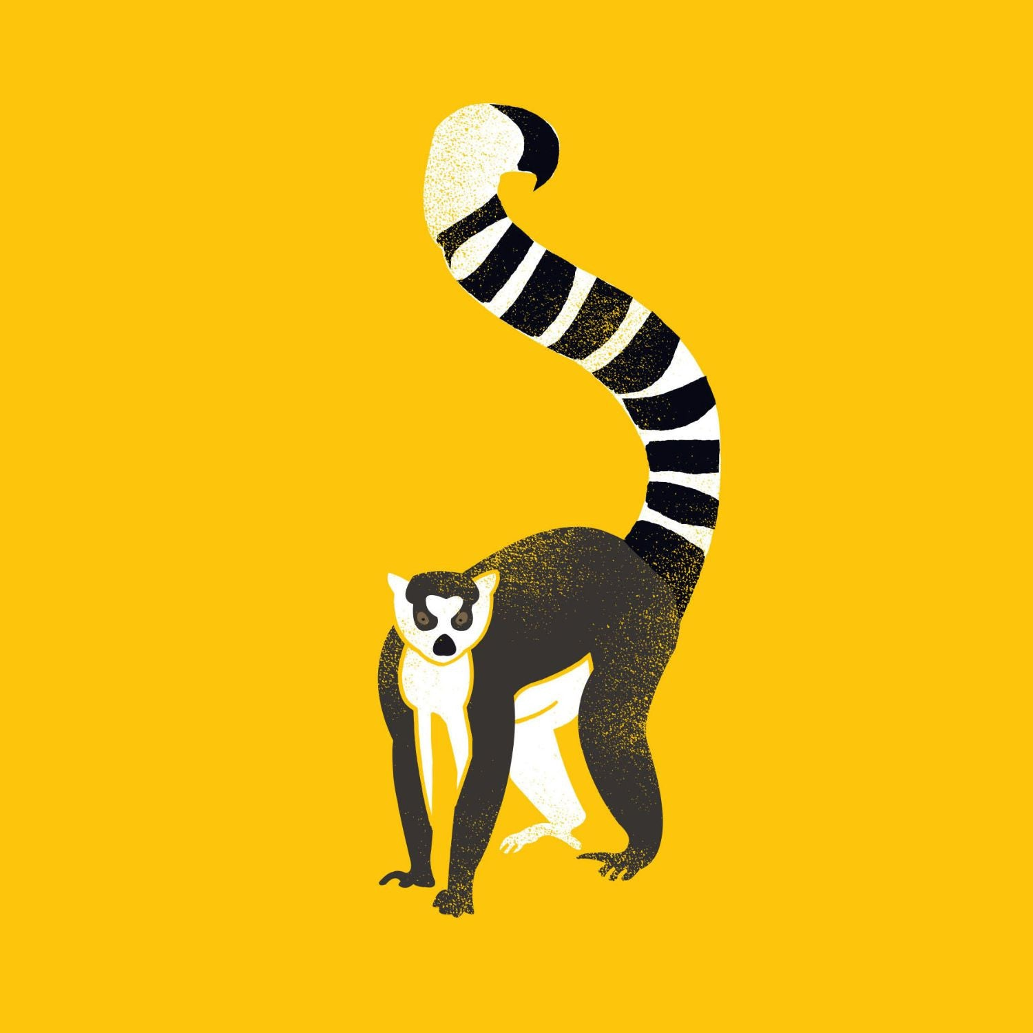 Ring Tailed Lemur - Canvas Prints by Hamid Raza | Buy Posters ...