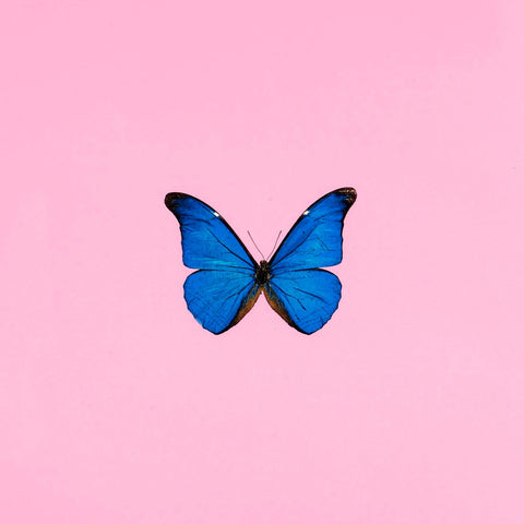 Modern Art - Blue Butterfly Against Pink Background