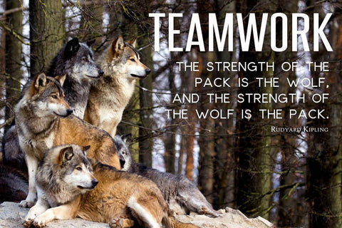 The Strength Of The Pack Is The Wolf And The Strength Of The Wolf Is The Pack - Rudyard Kipling Inspirational Quote Law Of The Jungle - Tallenge Motivational Poster Collection by Sherly David
