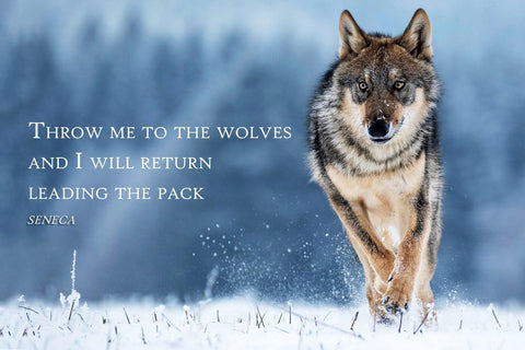 Throw Me To The Wolves And I Will Return Leading The Pack - Seneca Inspirational Quote - Tallenge Motivational Poster Collection by Sherly David