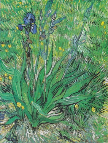 Vincent van Gogh - Irises by Vincent Van Gogh