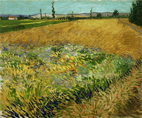 Vincent van Gogh - Wheatfield - Art Prints