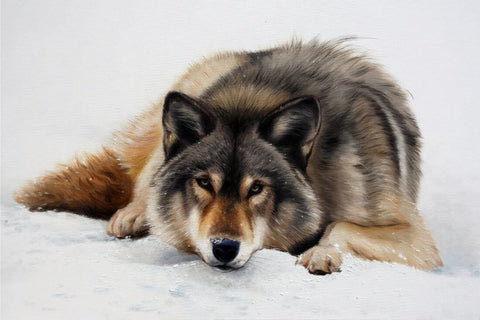 Wolf In Snow - Realistic Animal Painting
