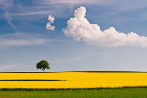 Yellow Crop Fields