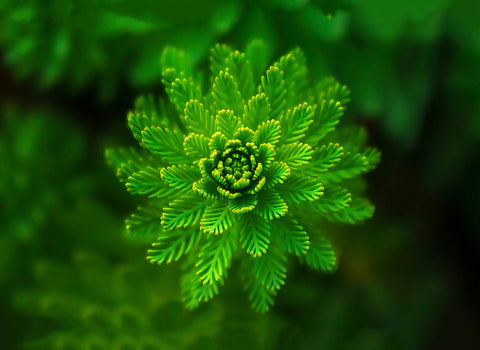 Best Gift for Valentines Day - Macro Green Leaves by Sina Irani
