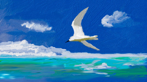 White Tern On The Water by Hassan Najmy