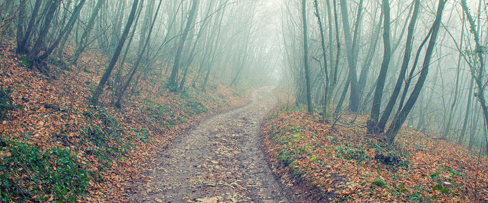 Walking In The Foggy Wood by Giordano Aita | Buy Posters, Frames, Canvas  & Digital Art Prints