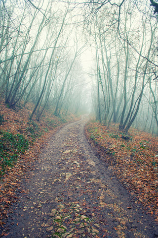 Walking In The Foggy Wood