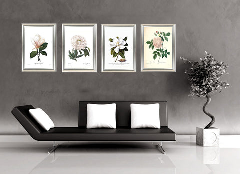Set Of 4 Botanical Illustration Paintings - Premium Quality Framed Print (15 x 20 inches)